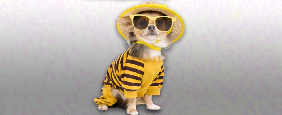 mode-chien-jaune-2
