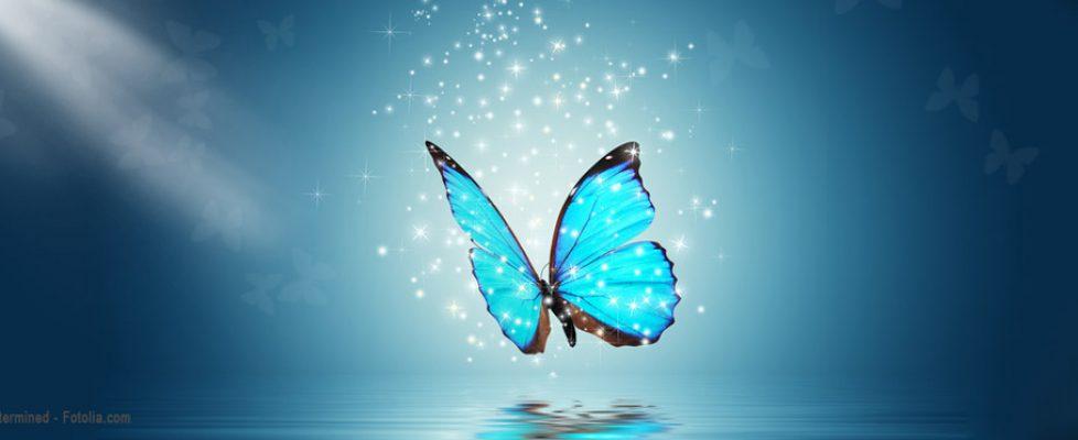 immortalite-papillon